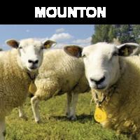 Mounton